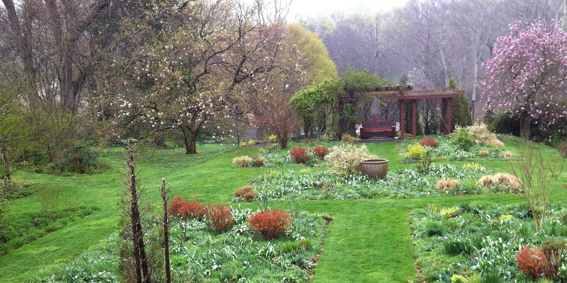 The best way to Replant Your Lawn