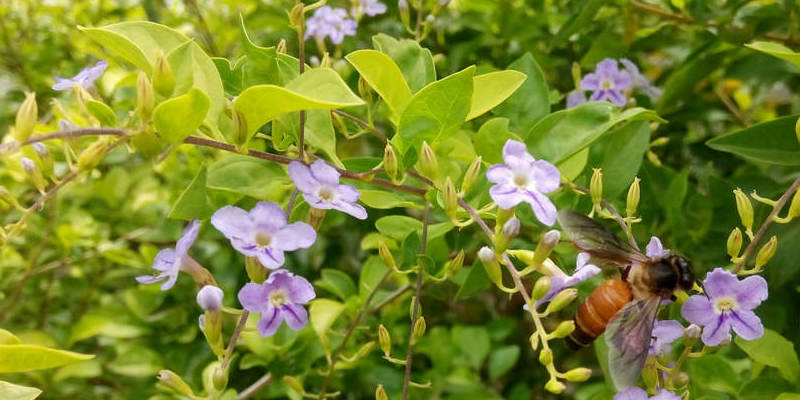 The best way to Plant Jasmine Clippings