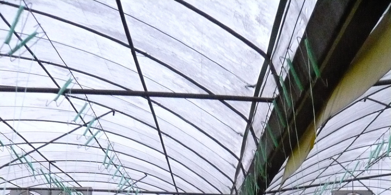 Go for a Greenhouse Impact With an Exotic Conservatory