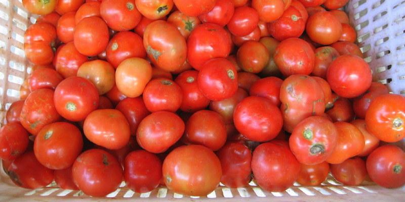 The Longevity of Flower, Vegetable & Herb Seeds